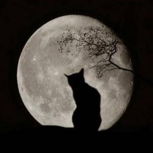 dancing paws in the moonlight