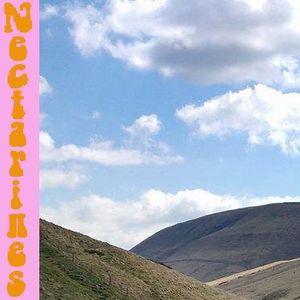 Nectarines 07/05/17