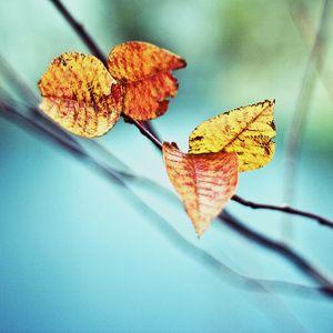 Purl - Autumn