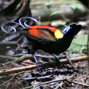 Dj Zukry - Sélection ornithologique