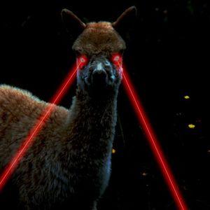 The Lazer Eyed Llama