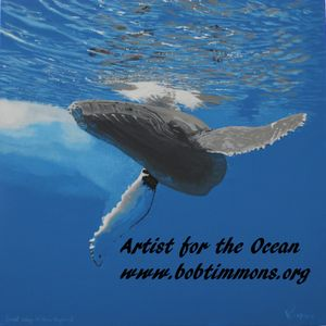 Bob Timmons - Artist for the Oceans