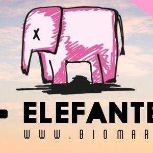 ELEFANTE ROSA  - 01.08.13 - BIOMARADIO.COM