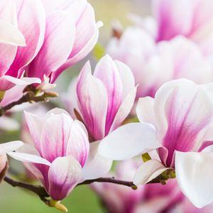 Magnolia - Mixtape By Jonathan Reichert