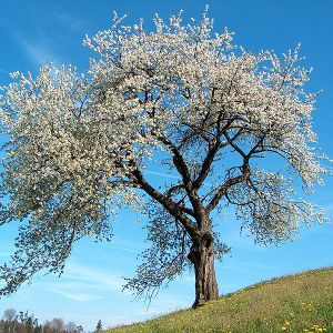 cvjetno proljeće