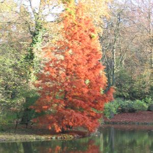 Herbst 2010 Trance Mix