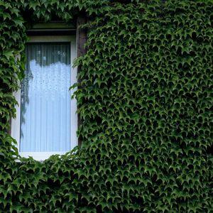 DJ Crank - Knock On My Window -      dnb - jungle / harcore
