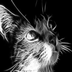 DeeJay BadCat - Just House Music