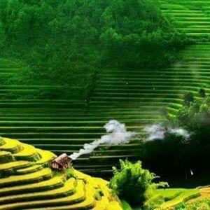 NST # fan of tuấn True Milk ))) By sonla anhtuan )))