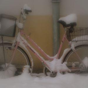 winter edition