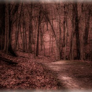 Blackthorn Path Guided Meditation: Rebirthing