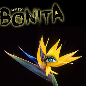hofer66 - bonita - live at ibiza global radio 170530