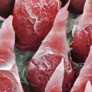 Meat Plasma Think Tank