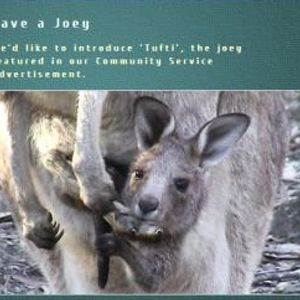 Kangaroo killings in Australia and the efforts to stop them