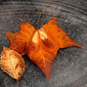 Chicago9 - Contemplation of autumn pt.2