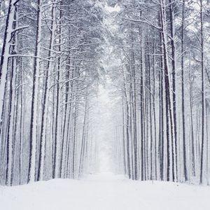 Winter Chill 2017