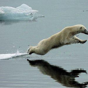Futuristic Polar Bear . . . 23.12.2015