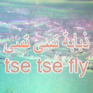 Tse Tse Fly Middle East - 3rd May 2017