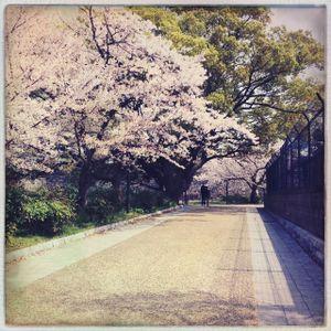 Hanami Mix 4/5/2014