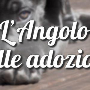 Radio Stonata. OGGI. rubrica. Velvet pets. 15.03.2016. servizio adozioni.
