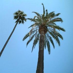 palms tech