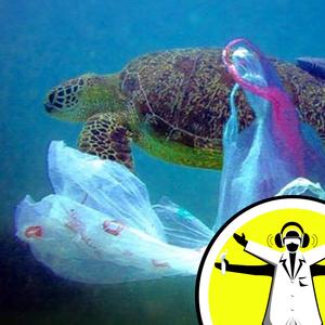 Lifting the lid on Plastic