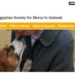 Animals in Egypt need urgent help - Interview with ESMA's Mona Khalil
