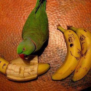 John McCririck's Left Handed Parrot