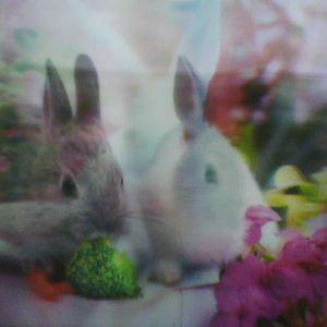 Not Davids Rabbits