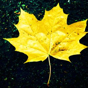 YELLOW LEAF MIX BY TREBLAND