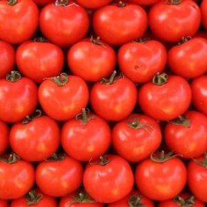 Bill Shakes 8 - Tomatoes