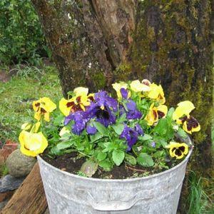 Iestādiet vienu mazu puķīti savas daudzdzīvokļu mājas pagalmā!