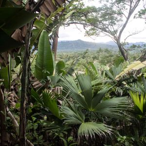 A Sonorous Expedition #3 - Rainforest Sounds - Tuesday 26th June 2018