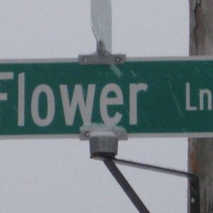 Salient - Flower Lane Presents...2