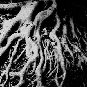 The Return Of Roots
