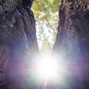 Palestra - 2017: Abraçar a Luz