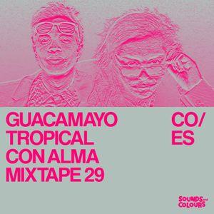 CON ALMA 29: Guacamayo Tropical