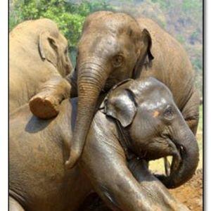 Drunk Elephant Sound System 12 Jan 2013