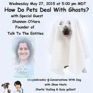 How do pets deal with ghost encounters?