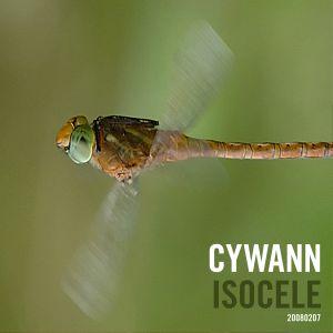 cywann - Isocele