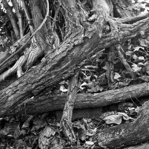 Roots & Branches Mix