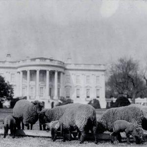 סולידאריות ובלוז נשיאותי