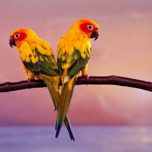 LR093 feat. Birds Of Rhythm