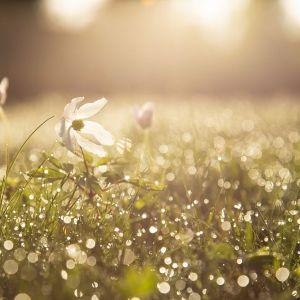 Sense of Spring