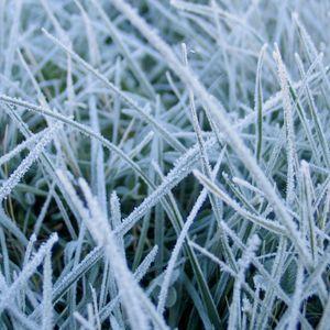 minimalfreak daisy wintermix