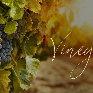 Vineyard – Obey to Abide