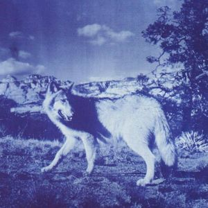Twin Wolf selector vol. 2