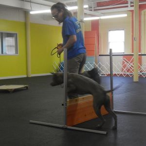 What Would Jeff Do? Real World Dog Training 5/10/2014