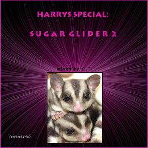 Harrys Special: Sugar Glider 2