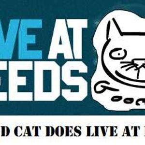 Good Cat Show 7
